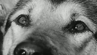 Павел Пламенев - Умирает моя собака